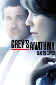 Grey's Anatomy: 11 Temporada